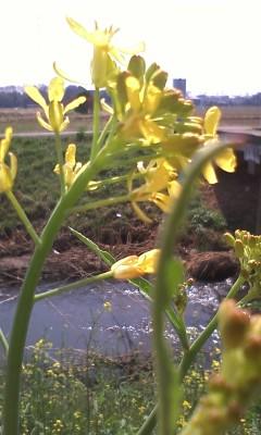 春の小川から
